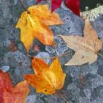 Autumn Granite  IV