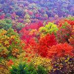 Autumn Hollow