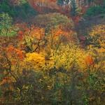 Autumn Hues Along the Katy Trail