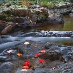 Autumn Riffle