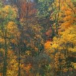 Autumn River Hills