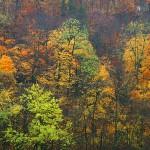 Autumn River Hills II