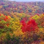 Autumn Wilderness II