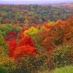 Autumn Wilderness III