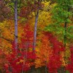 Autumn Woods I