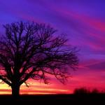 Burr Oak Panarama