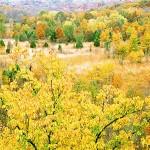 October Meadow