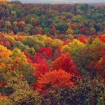 Ozark Autumn Panorama
