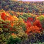 Ozark Autumn Wilderness