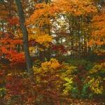 Ozark Autumn Woods