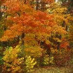 Ozark Autumn Woods II