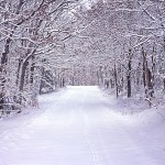 Fresh Snow on a Country Road